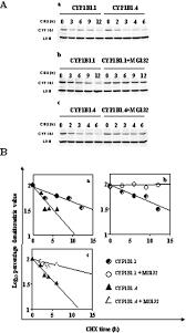 Post My Resume Online Proteasomal Degradation Of Human Cyp1b1 Effect Of The Asn453ser