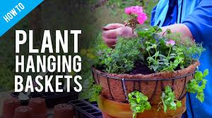 hanging basket plants for sun a guide to hanging basket plants u0026 flowers youtube