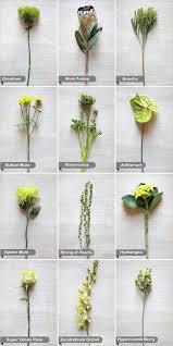 best 25 yellow flowers names ideas on pinterest yellow