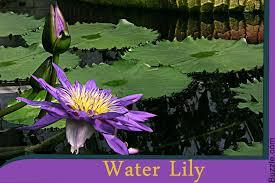Tropical Rainforest Plant Species List - amazon rainforest plants and names