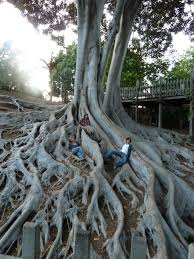 best 25 tree roots ideas on roots tree roots