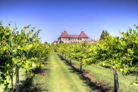a vineyard in our own backyard u2013 vinings lifestyle magazine