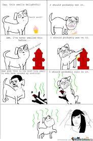 Meme Comic Funny - meme center petkovic1 likes