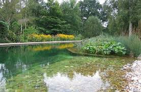 Where To Put A Pool In Your Backyard Natural Pools Or Swimming Ponds U2022 Nifty Homestead