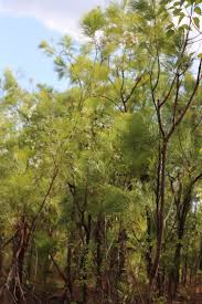native plants adelaide adelaide river land for wildlife top end