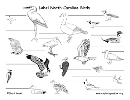 North Carolina birds images North carolina habitats mammals birds amphibians reptiles jpg