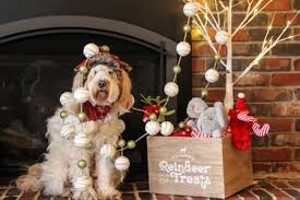 dog christmas christmas safety tips for dogs creating a dog friendly home
