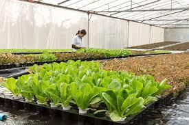 organic fertilizer compost u2013 danger in the vegetable garden vol 2