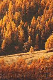 autumn beautiful color fall forest image 3589674