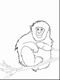 printable monkey coloring pages beautiful monkey coloring pages for kids with monkey coloring