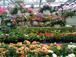 spring flowers greenhouse 7 free stock photo public domain pictures