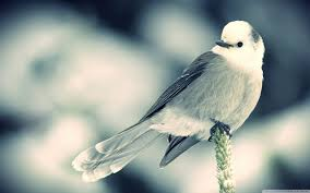 bird wallpapers white little bird 4k hd desktop wallpaper for 4k ultra hd tv