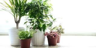 plants indoors indoors plants indoors plants images cursosfpo info
