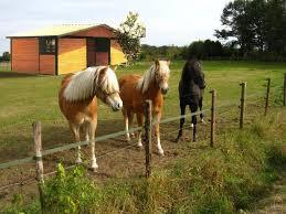 Little Barns Lonestar Custom Barns
