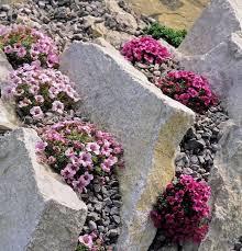 Rocks For Garden How To Create A Rock Garden Mnn Nature Network