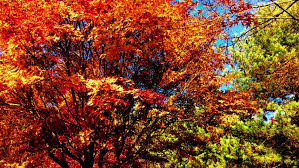 colorful autumn trees forest golden yellow leaves