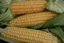 cuisine simonet corn simonet