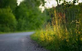 beautiful nature road 6967561