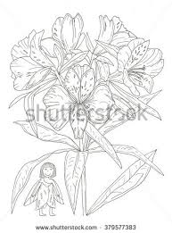 flower fairy coloring page stock illustration 379577383 shutterstock