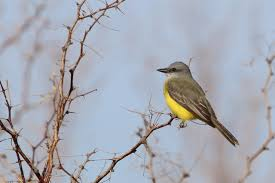 Nevada Birds images Bird watching bountiful around valley las vegas review journal jpg