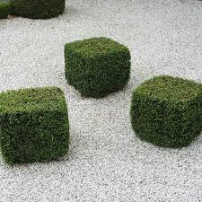 Euonymus Topiary Buxus Sempervirens Box Topiary Cubes