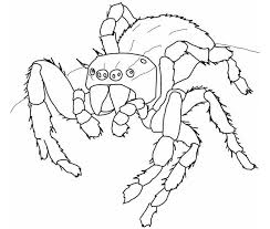 spider coloring pages free print coloringstar