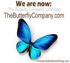 butterfly gifts butterflies insects moths beetles butterfly gifts supplies