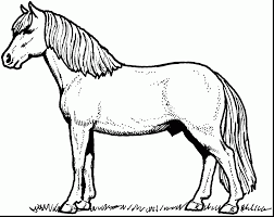 amazing horse coloring pages with printable horse coloring pages