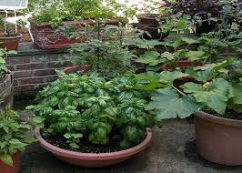 Vegetable Container Garden - lovable container vegetable garden plans vegetable container
