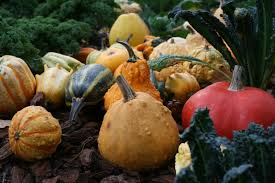 free images plant fruit produce vegetable pumpkin calabaza