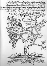 tree symbol meaning file centrum securitatis tree of life jpeg wikimedia commons