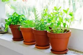 Window Sill Herb Garden Designs Inspiring Window Sill Garden Designs With How To Make A Windowsill