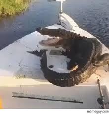 Alligator Meme - drunk enough to punch an alligator meme guy