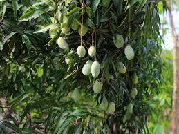 plots overview pragati green living