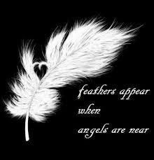 feathers hush hush inspirational