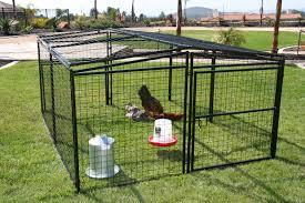 welded wire chicken yard from my pet chicken