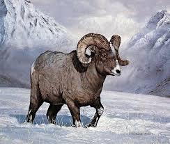 Items Similar To Art Print - 27 best charles frace art images on pinterest wildlife art