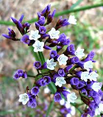 common purple garden flowers interior design