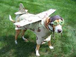 40 most funny halloween animal pictures and images