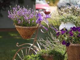 How To Start A Flower Garden In Your Backyard Growing Lavender Bonnie Plants