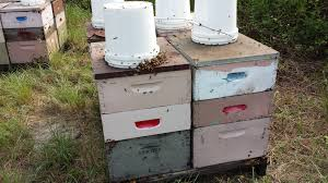 Top Bar Beehive Plans Free Prepping 101 Keeping Bees Alternative Hives Vs Langstroth