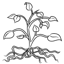 of a plant coloring page