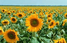 how to grow flowers for profit chron com