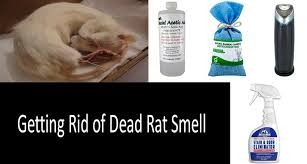 how to get rid of dead rat smell effectively