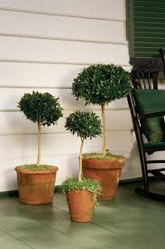 Front Porch Topiary Spectacular Container Gardening Ideas Southern Living