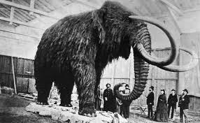 scientists bring woolly mammoths bbc newsbeat