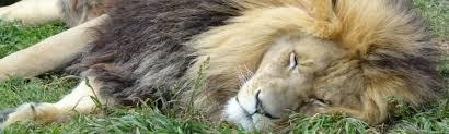 Wisconsin wildlife tours images Tours wisconsin big cats jpg