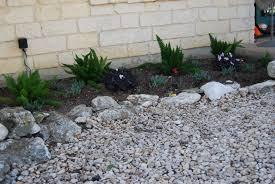 outdoor u0026 landscaping lovely foxtail fern for garden decoration