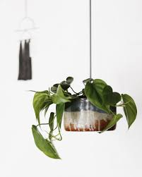 the top 10 indoor plants to decorate your home fat mum slim