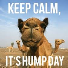 Hump Day Camel Meme - happy hump day images pictures pics photos for friends